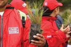 300 millones de árboles plantados por Coca-Cola.