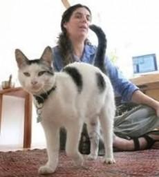 El arenero del gato no debe tener aroma