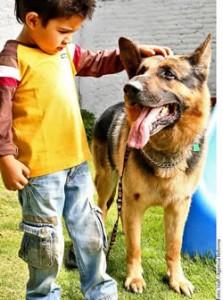 Un perro prepara para la llegada de un hermano.