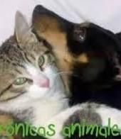 Es mentira que gatos y perros no puedan convivir