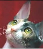 Observa a tu gato para conocerlo mejor.