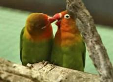 Otra teoría es que nace de ver como las aves alimentan a los críos