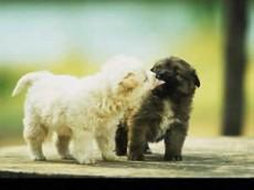 Algunos animales también se besan.