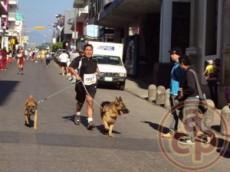 Al perro se le debe acostumbrar al deporte y a ir rodeado de gente.