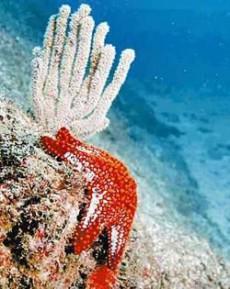El coral es considerado como fuente de vida y acción, trayendo vibraciones positivas para signos como Libra, Piscis y Tauro.