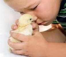 No sólo las madres humanas tienen actitud protectora y afectiva, también mamíferos y aves.