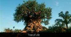 El Árbol de la Vida de Animal Kingdom tiene 325 animales tallados en su tronco.