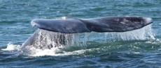 Guerrero Negro es lugar extraño y de poco interés hasta que llegan las ballenas.