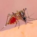 Contra los insectos