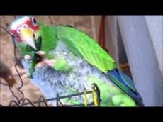 Las aves no sienten el picor.