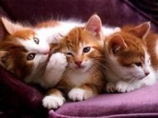 La hermandad, cariño y atención entre gatitos también existe.