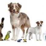 Una mascota implica responsabilidad, afecto y cuidado.