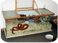 Calienta el aire que respiran por medio de un foco para reptiles.