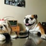 Las 10 cosas que pueden costarle la vida a tu mascota