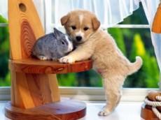 Tener una mascota implica dedicación, responsabilidad y compromiso